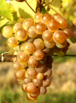 Loire Valley: Confronted to the Sauvignon Blanc, the more low profile varietals fight back.