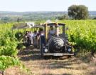 Œnotourisme : comme l'export, un nouveau métier à apprendre pour le vigneron !