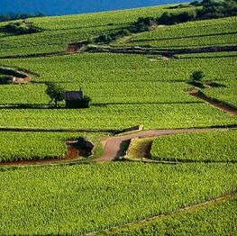 Bourgogne : la hausse des prix continue, faute de volumes disponibles