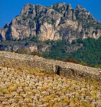 Hiérarchie des crus du Languedoc : l'INAO reconnaît l'AOC Terrasses du Larzac