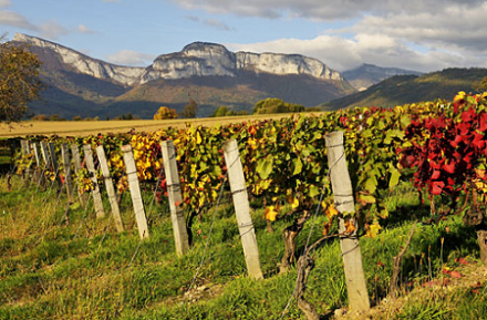 Vins effervescents : la Savoie a son crémant d'appellation
