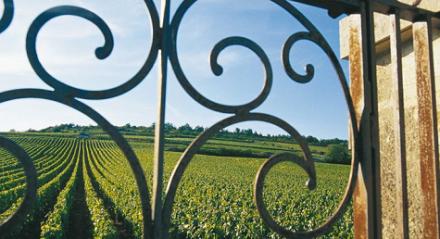 Vins les plus chers du monde : le top 50, nouveau monopole de la Bourgogne