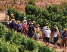 Paroles de vignerons : l'oenotourisme ? Une activité rentable !