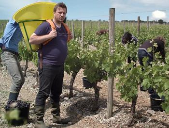 Vendanges 2014 : une récolte française nettement à la hausse, « presque partout »