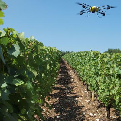 Drones et flavescence dorée : la détection des vignes atteintes, c'est bientôt automatique