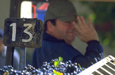 Vendanges 2014 : 4,5 millions hl de vins produits en Hérault (-21 %)