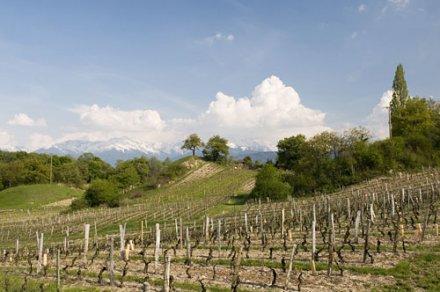 Crémant de Savoie : le dernier né des crémants