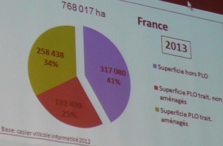 Périmètre de lutte : la flavescence dorée et le vignoble français en chiffres clés