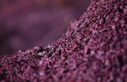 Charbon à usage viticole : la distillerie vinicole investit dans la R&D [exclusif]