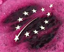 Vinifications bio : la France prend position sur la révision de la réglementation 2015