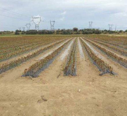 Languedoc-Roussillon : un climat 2014 désastreux pour les pépiniéristes