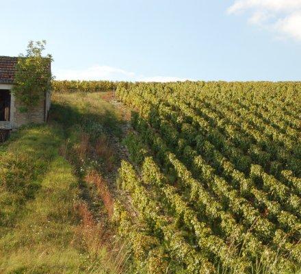 Financement de foncier viticole : les nouvelles formules pour s'installer plus facilement