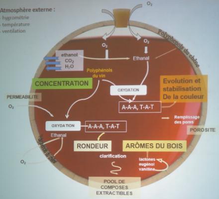 Retour aux fondamentaux : à quoi sert l'élevage des vins en barrique ?
