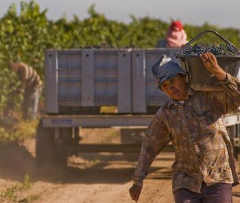 Argentine : les vendanges 2015 s'annoncent « meilleures et plus généreuses »