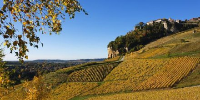 Démarrage dans de bonnes conditions des vendanges 2015 dans le Jura