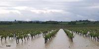 Intempéries : le vignoble héraultais inondé