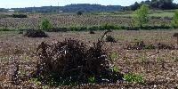 L'Aude face au problème posé par les nombreuses friches de vignes